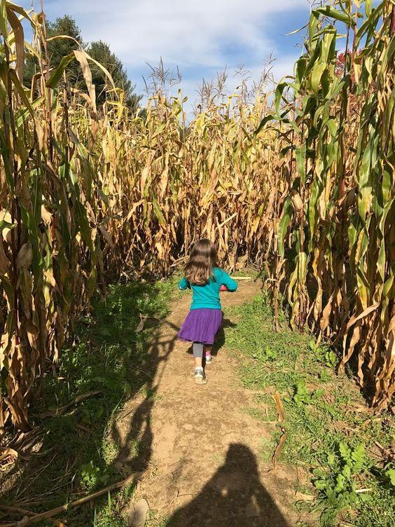 labirint kukuruza