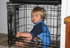 odgajanje dvogodišnjaka